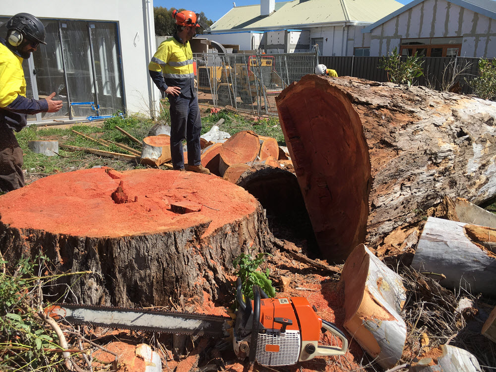 BOSS-Tree-Stump-Removal-Pruning-01