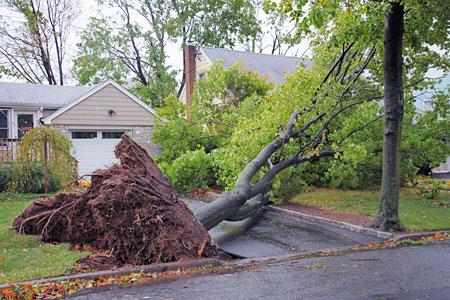 Storm-Damaged-My-Tree