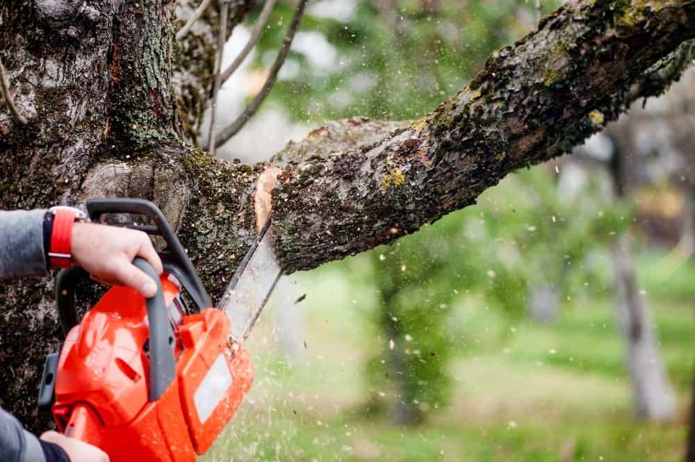 cutting-tree-09262018-min