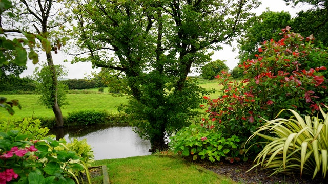 Well maintained garden with tree